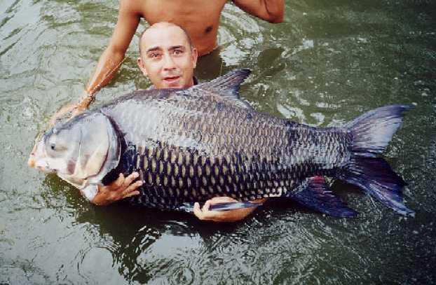 рыбалка в тайланде карп